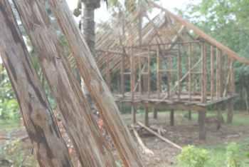 Постройка из тропического леса