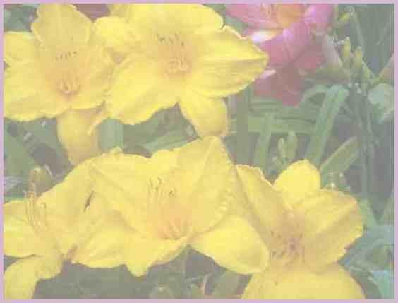 Прекрасные цветы Сухумского ботанического сада