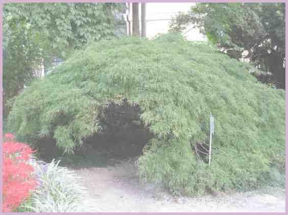 Уникальная экспозиция Сухумского ботанического сада