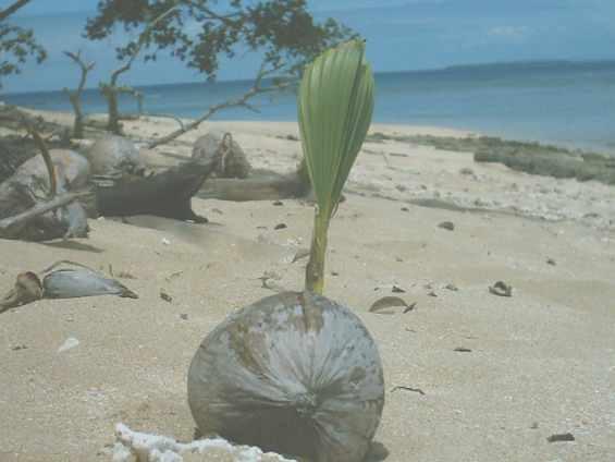 Тропический плод на песчаном побережье