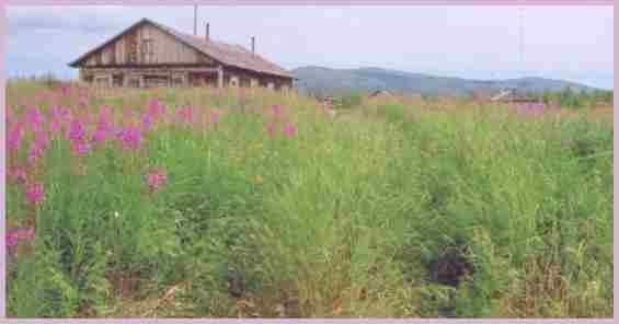 Большой Шантар. Домики на цветущей поляне